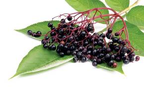 Au Natural Factual: Elderberry