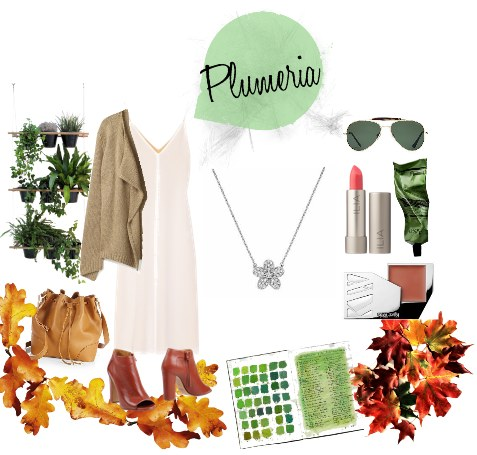 plumeria 2